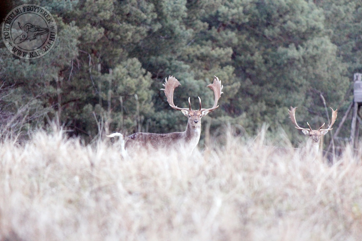 Blackpowder hunting with 4 Pedersolis | Official Blog Davide